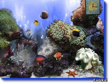 риф актиний, анимированные обои